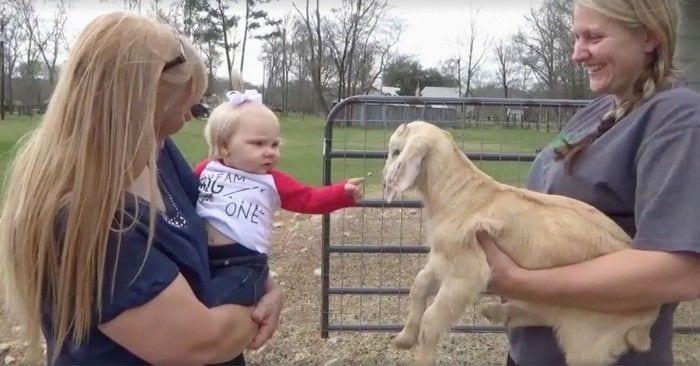 bebe cabra dest