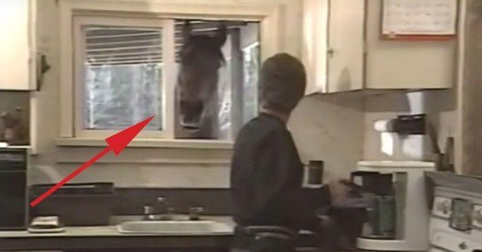 caballo amigo mujer