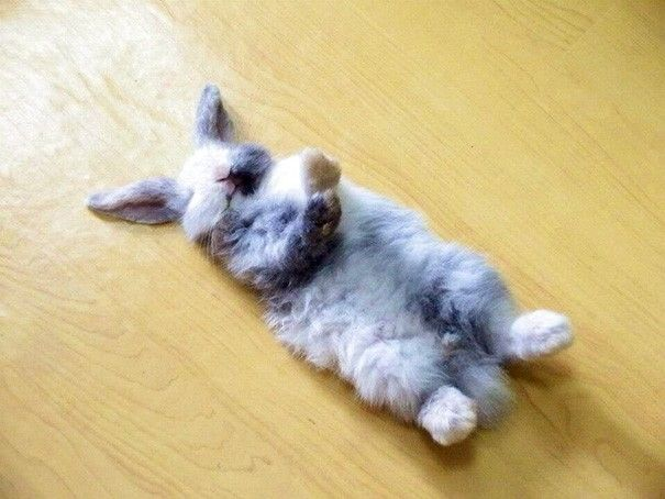 descansar-dura-vida-animal17