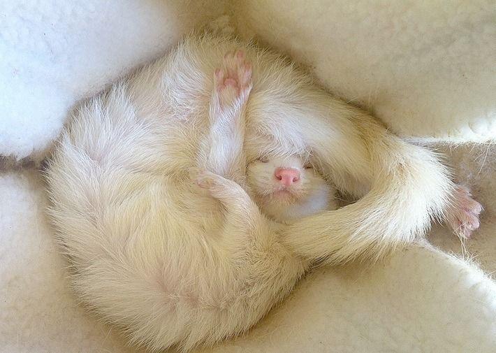 descansar-dura-vida-animal3