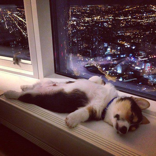 descansar-dura-vida-animal9