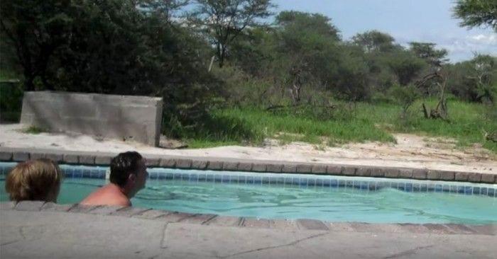 elefante piscina
