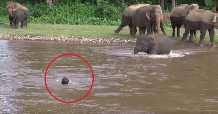 elefante salva hombre 1