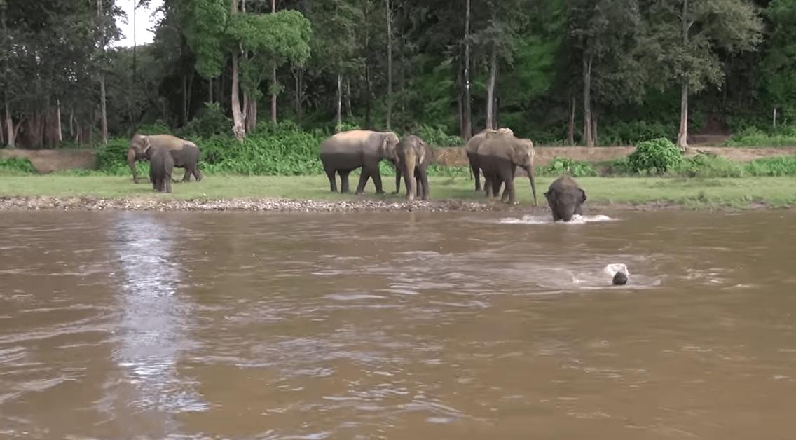 elefante-socorrista