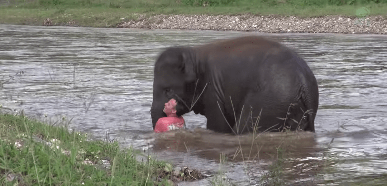 elefante-socorrista2