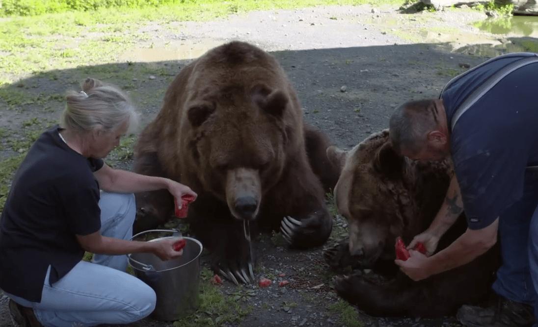 familia-osos1