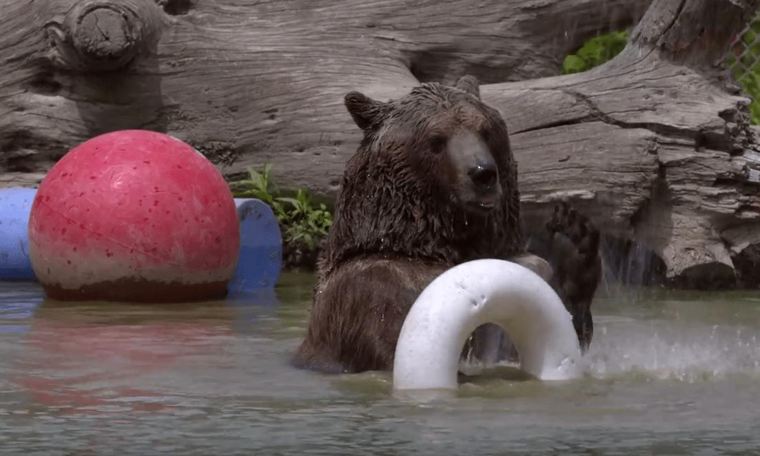 familia-osos10