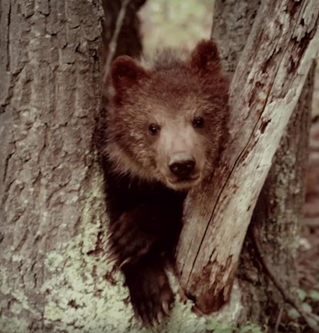 familia-osos3