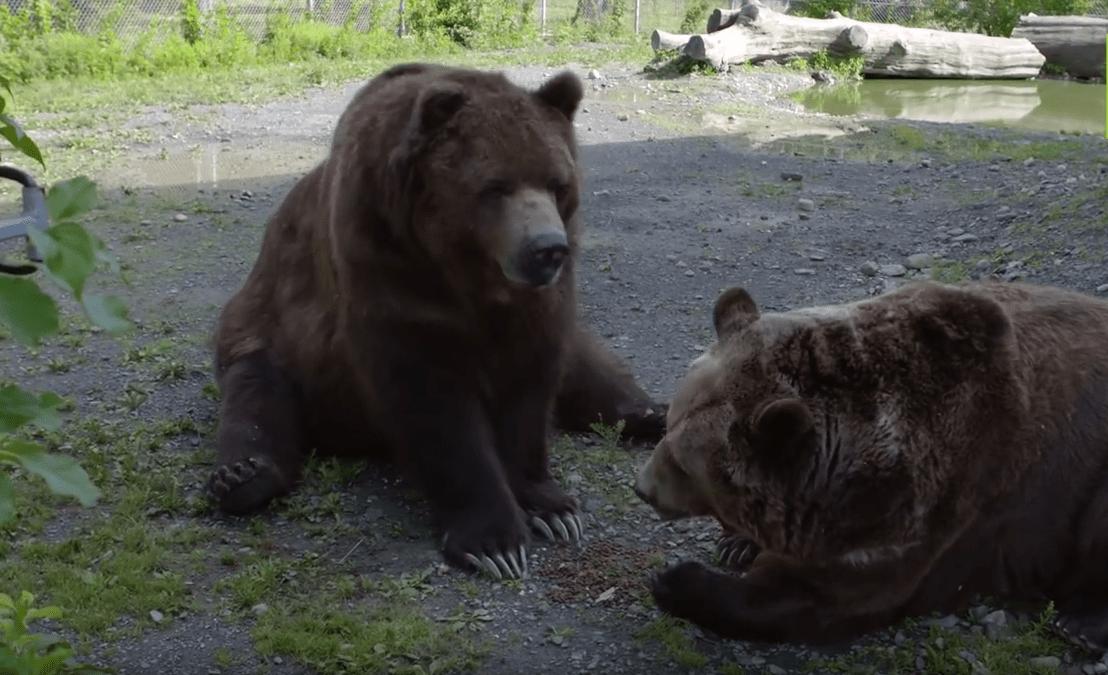 familia-osos8