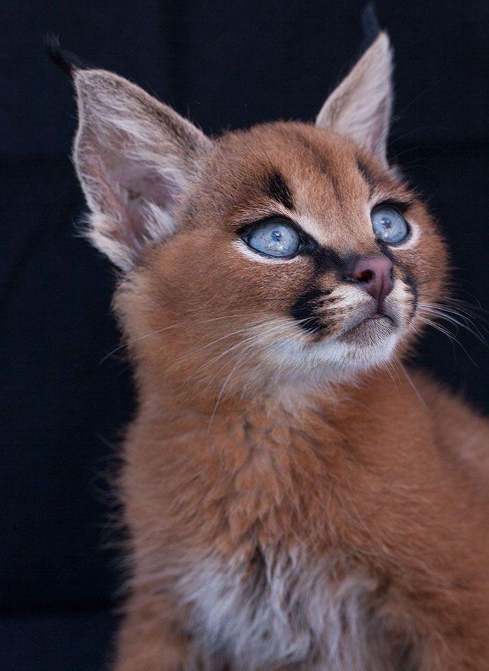 gato-precioso1