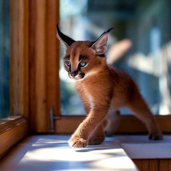 gato-precioso14