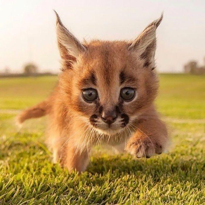 gato-precioso4