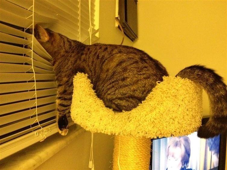 gatos-dormidos-sitios-raros10