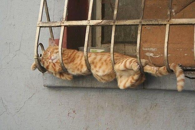 gatos-dormidos-sitios-raros12