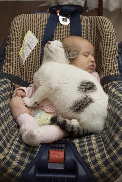 gatos-dormidos-sitios-raros13
