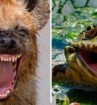 naturaleza divertida concurso foto