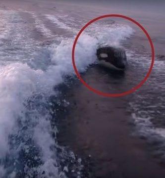 orcas persiguen barca dest