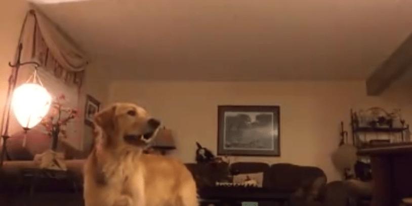 perro-cantando