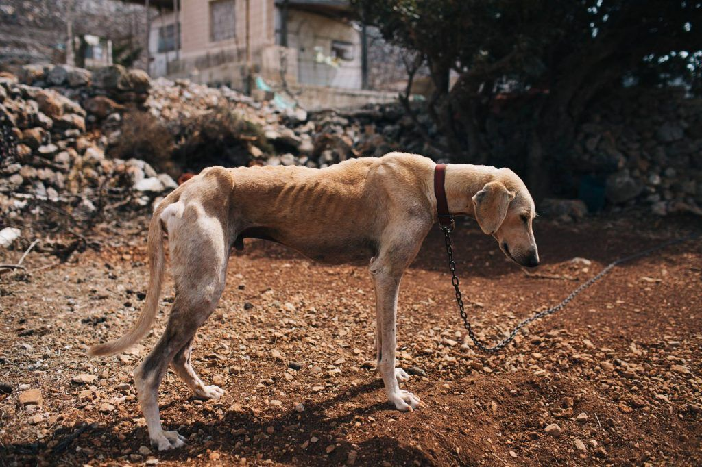 perro recuperacion2
