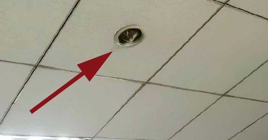 vigilancia gato techo oficina