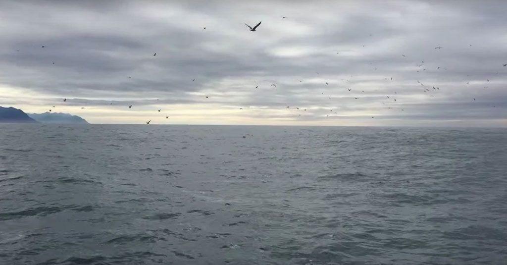 vuelo gaviotas ballenas
