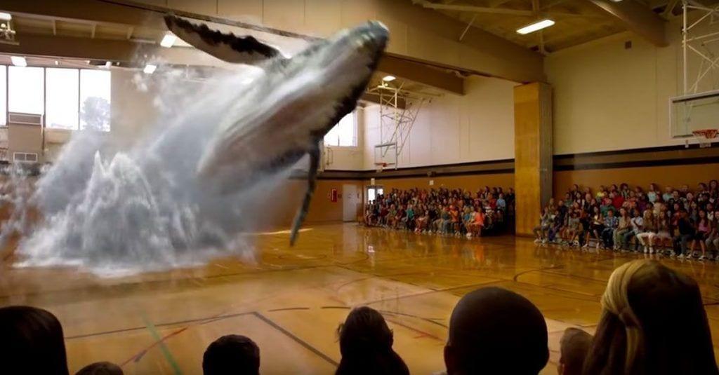 7d zoos magic leap