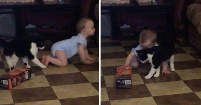 bebe gato dest
