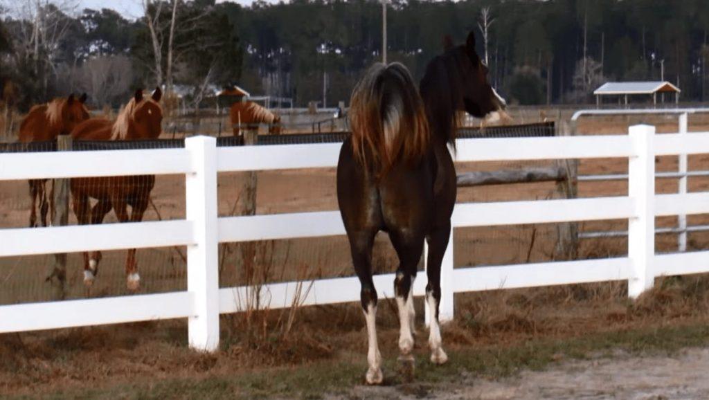 caballo-bailarin2