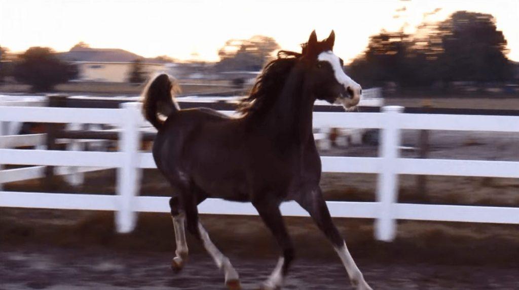 caballo-bailarin3
