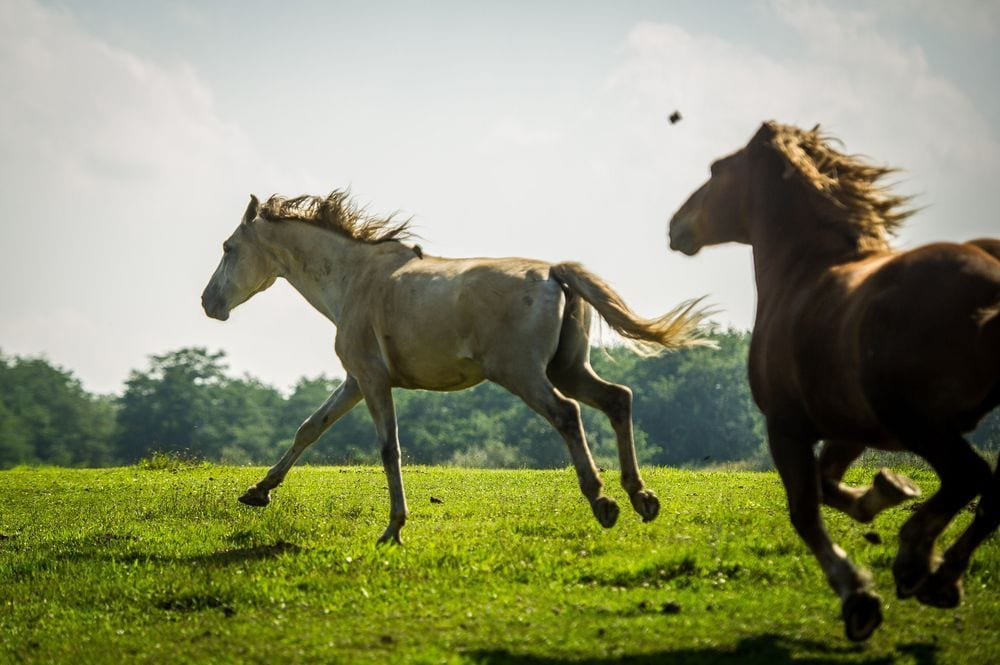 caballo-maraton