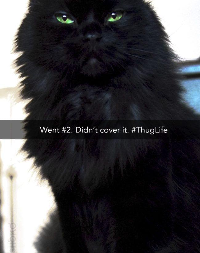 cosas-de-gatos10