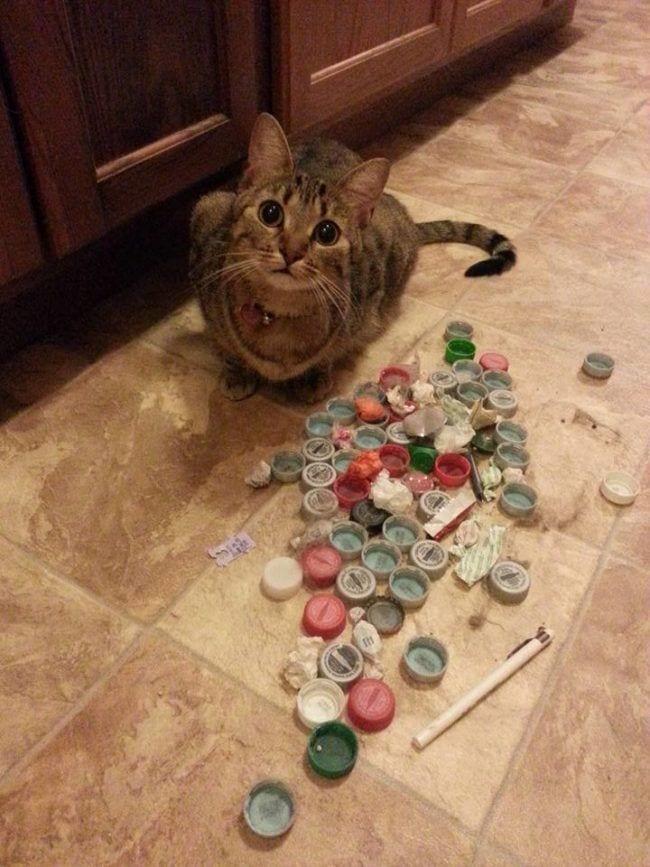 cosas-de-gatos14