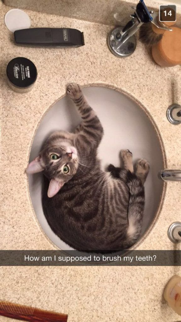 cosas-de-gatos16
