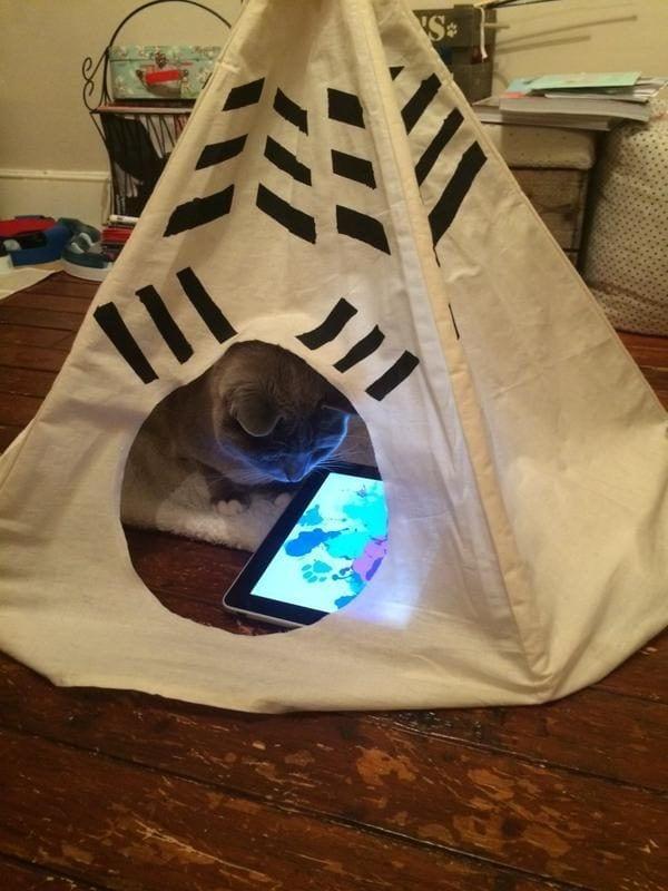 cosas-de-gatos17