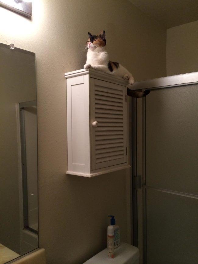 cosas-de-gatos2