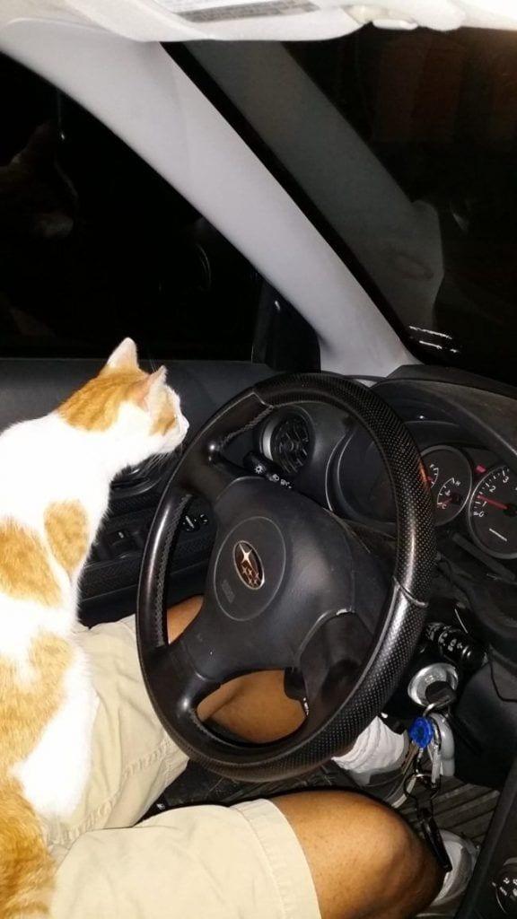 cosas-de-gatos3