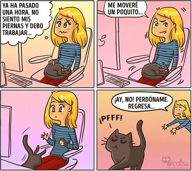 gatos-cambian-vida12