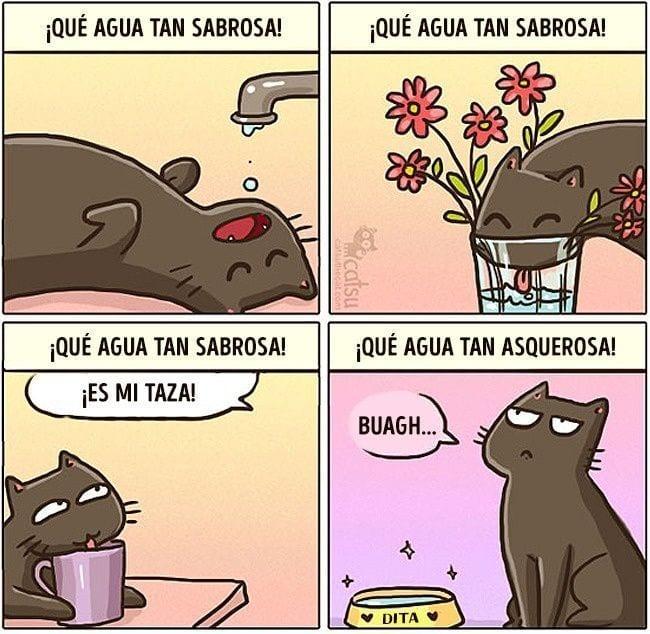 gatos-cambian-vida14