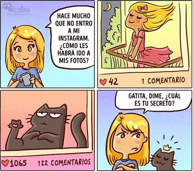 gatos-cambian-vida15