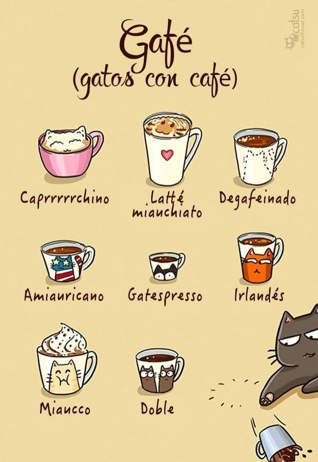 gatos-cambian-vida2