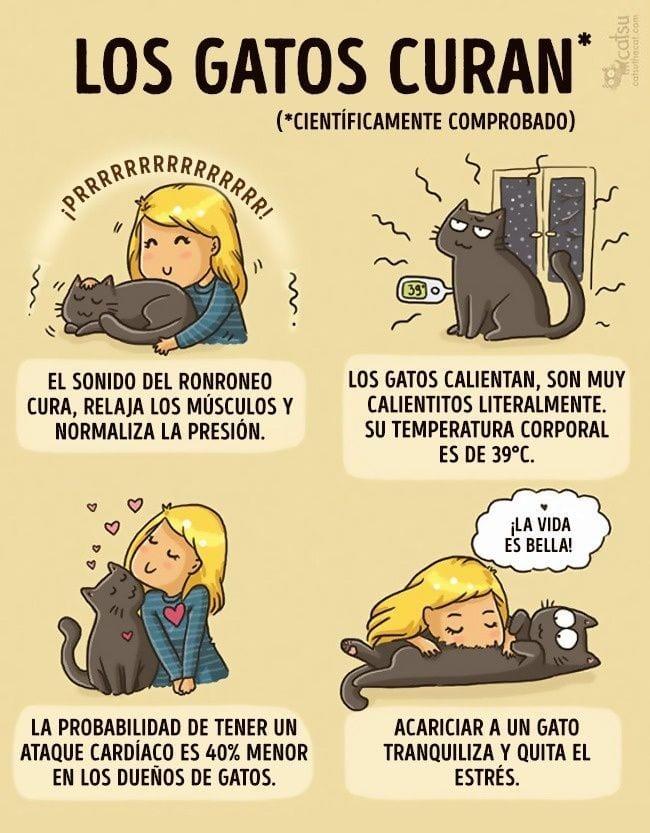 gatos-cambian-vida20