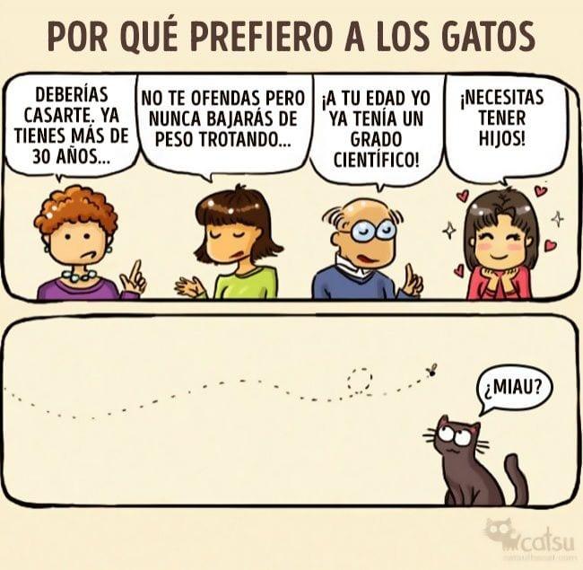 gatos-cambian-vida5