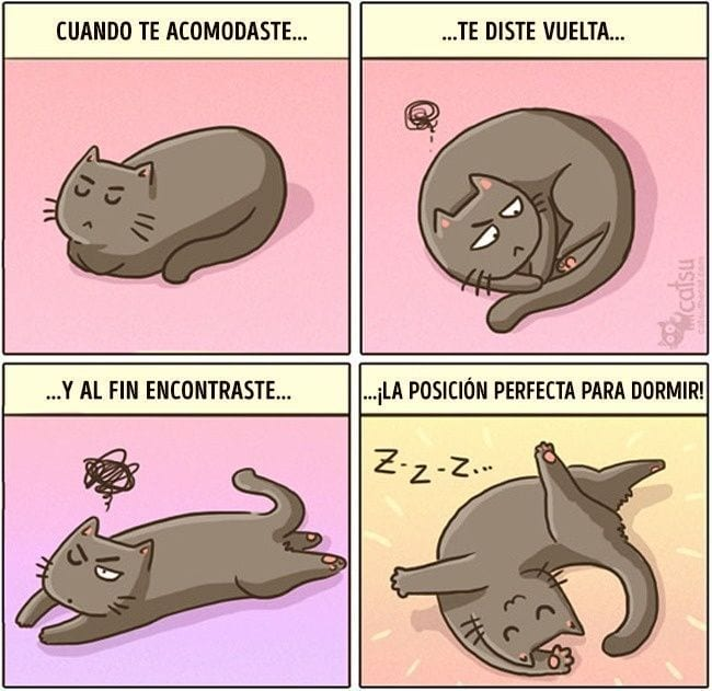 gatos-cambian-vida6