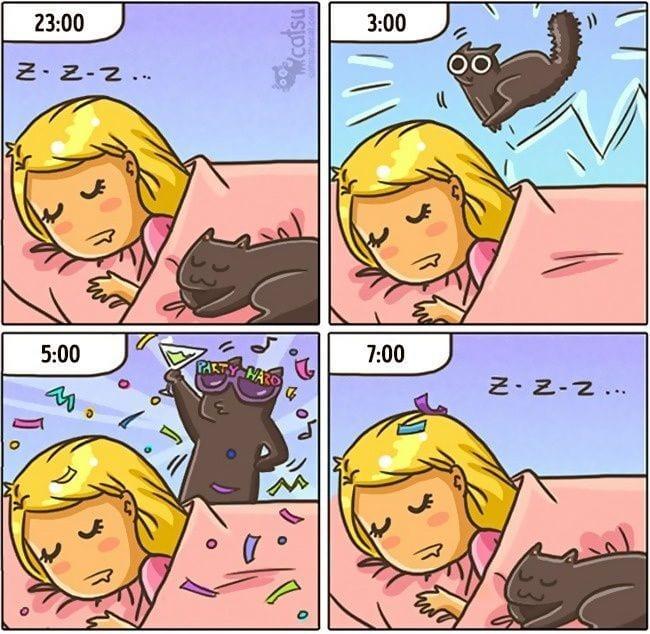 gatos-cambian-vida7