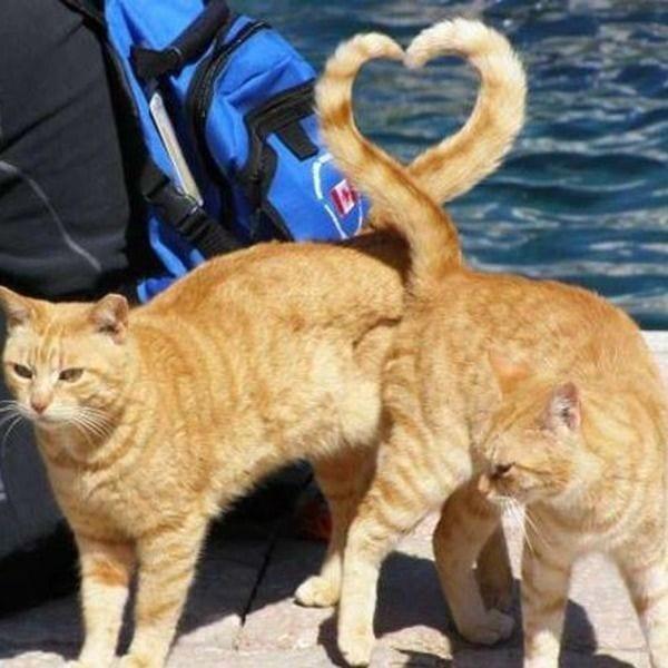 gatos-comunicacion5
