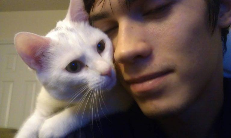 gatos-comunicacion8