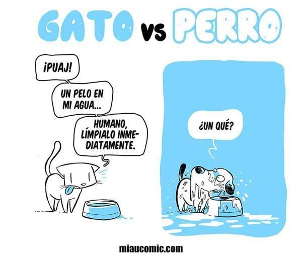 gatos-contra-perros2