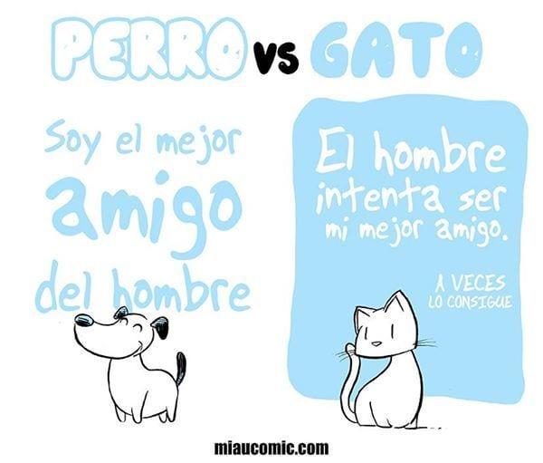 gatos-contra-perros4