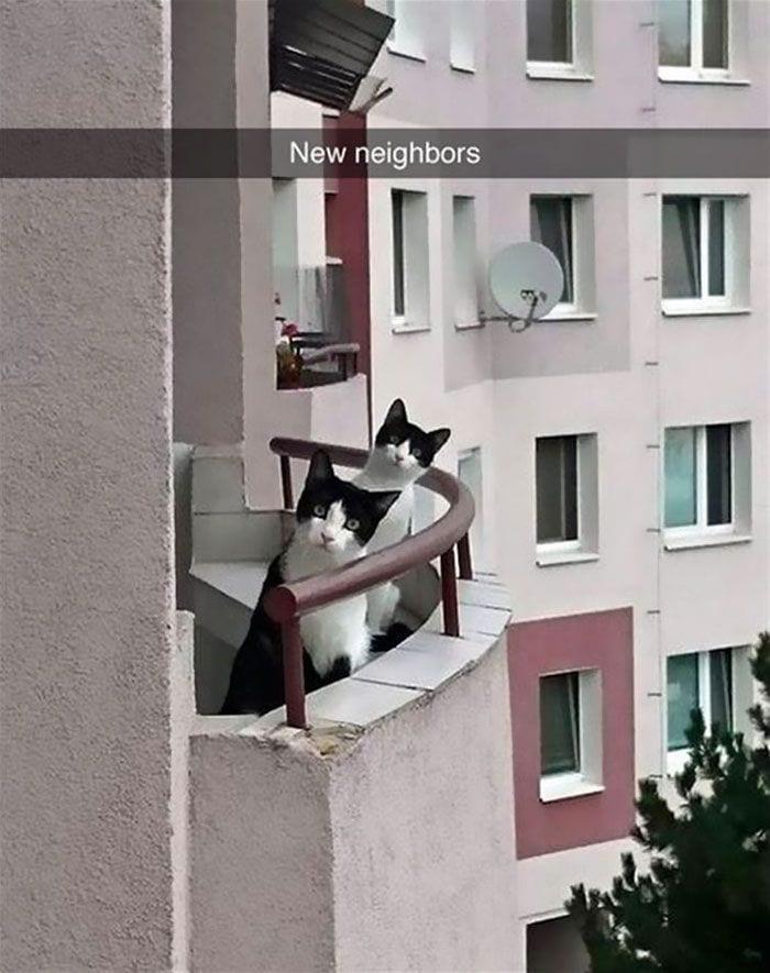 gatos-curiosos11