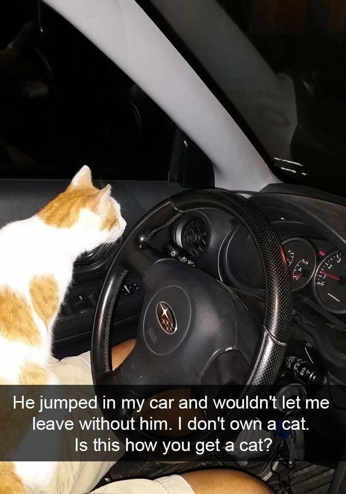 gatos-curiosos4